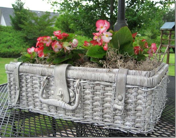 This gray basket makes an adorable planter.
