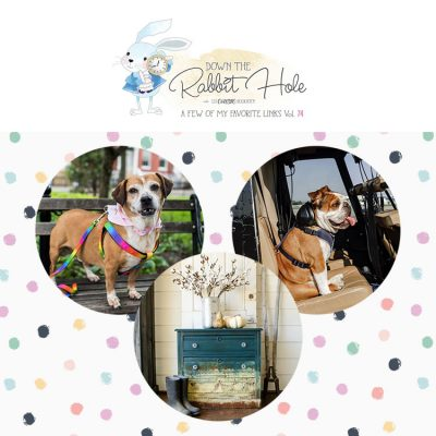 Down the Rabbit Hole // Where Cool Links & Pet Rescue Meet!!!!!