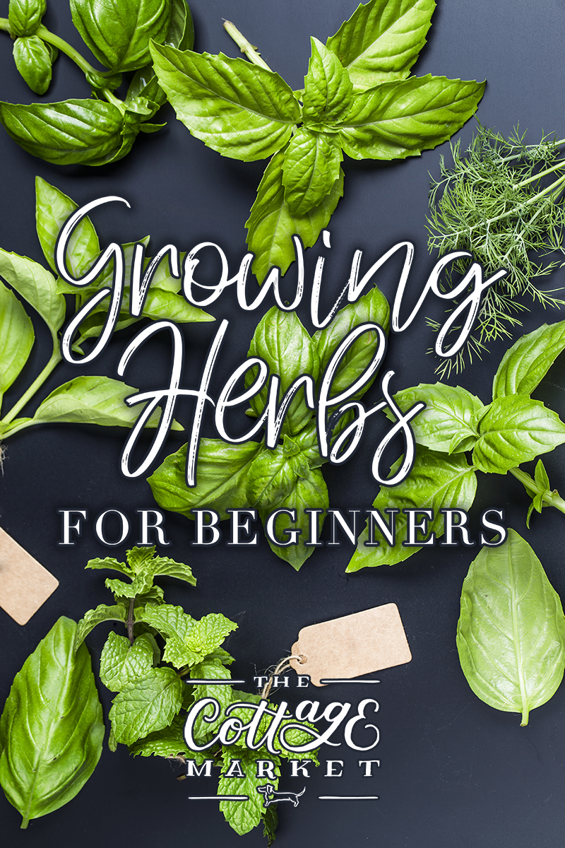 Growing Herbs For Beginners