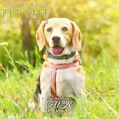 Growing a Pet Safe Garden
