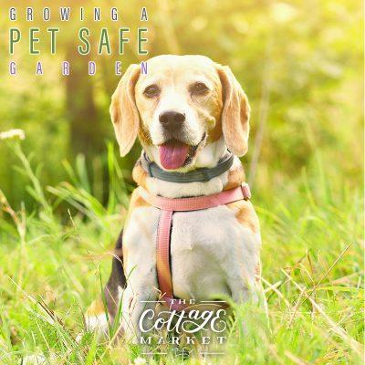Growing a Pet Safe Garden