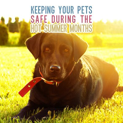 Keeping Your Pets Safe During the Hot Summer Months