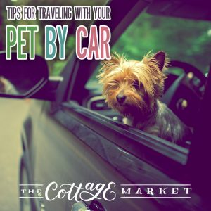 Tips for Traveling with your Pet by Car