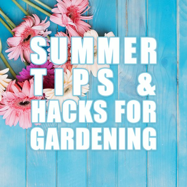 Summer Tips and Hacks for Gardening