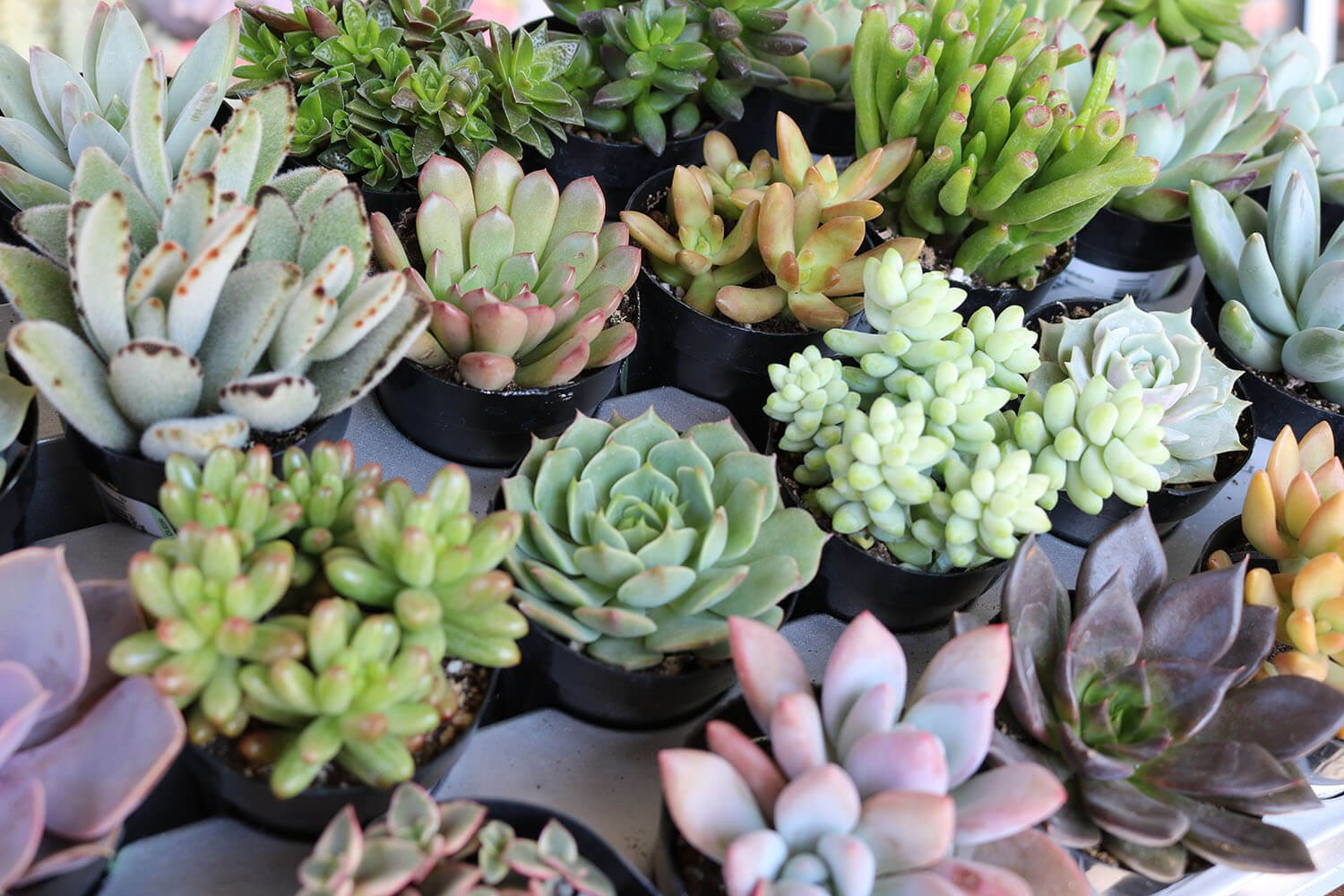 Succulents are perfect plants to have in your home year-round for some fresh decor
