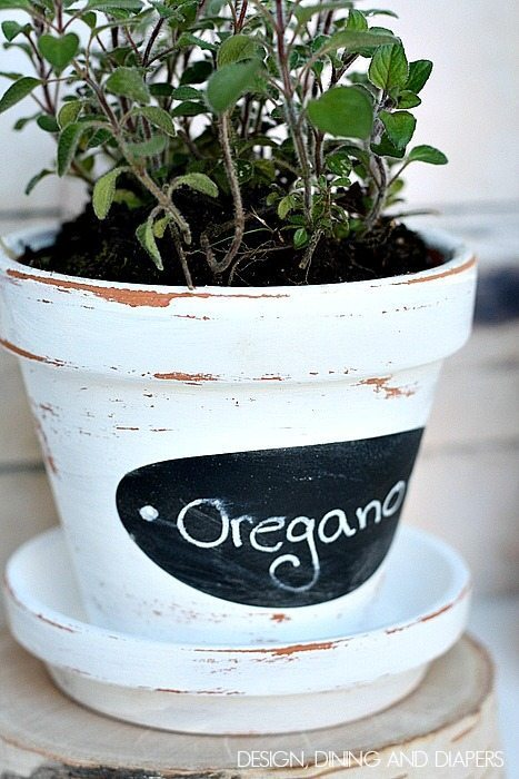 This adorable oregano flower pot painted white is simple and cute.