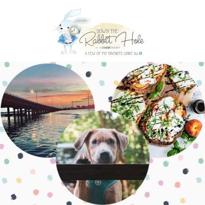 Down the Rabbit Hole // Where Cool Links & Pet Rescues Meet!!!!!