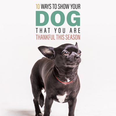 10 Ways to Show Your Dog You Are Thankful This Season