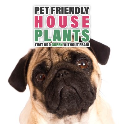 Pet Friendly Houseplants That Add Green Without Fear