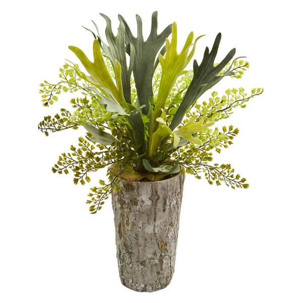 https://thecottagemarket.com/wp-content/uploads/2019/06/staghornfern.jpg