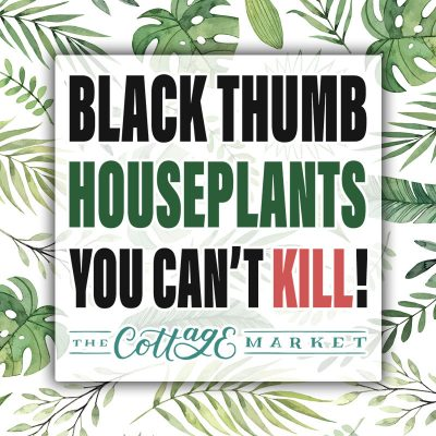 Black Thumb Houseplants You Can't Kill