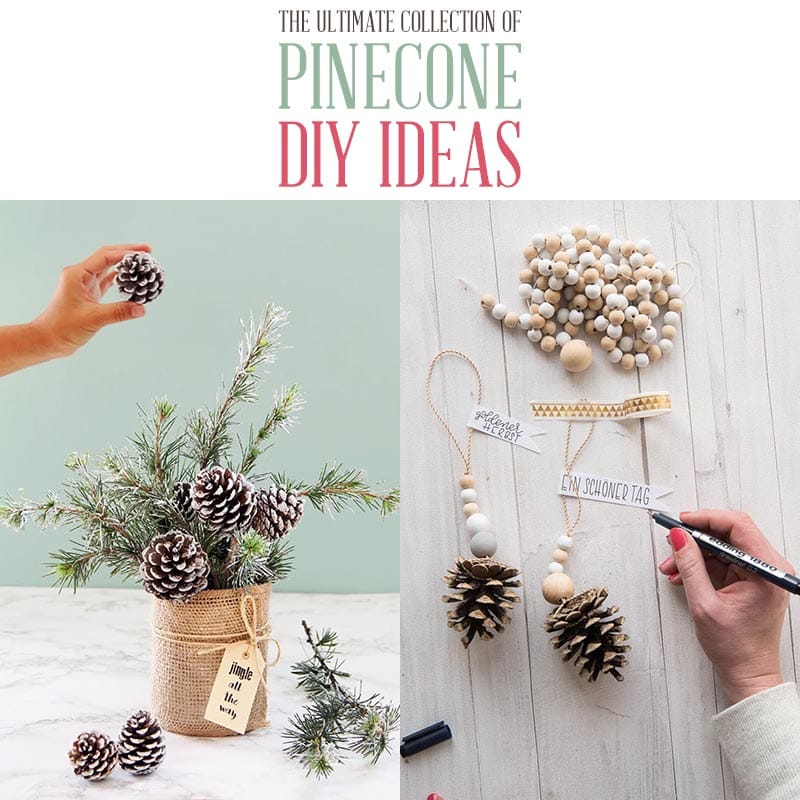 https://thecottagemarket.com/wp-content/uploads/2020/10/Pinecone-DIY-Projects-T-5.jpg