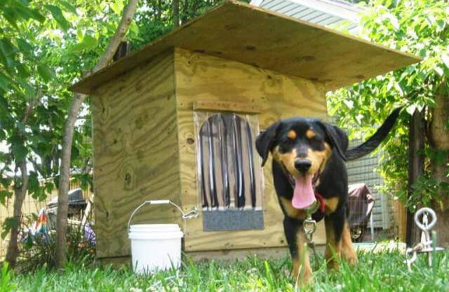 https://thecottagemarket.com/wp-content/uploads/2020/12/Happy-Dog-With-New-Doghouse.jpg